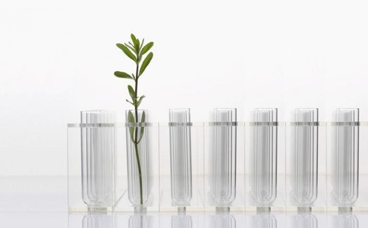 Proefbuisjes met plantje