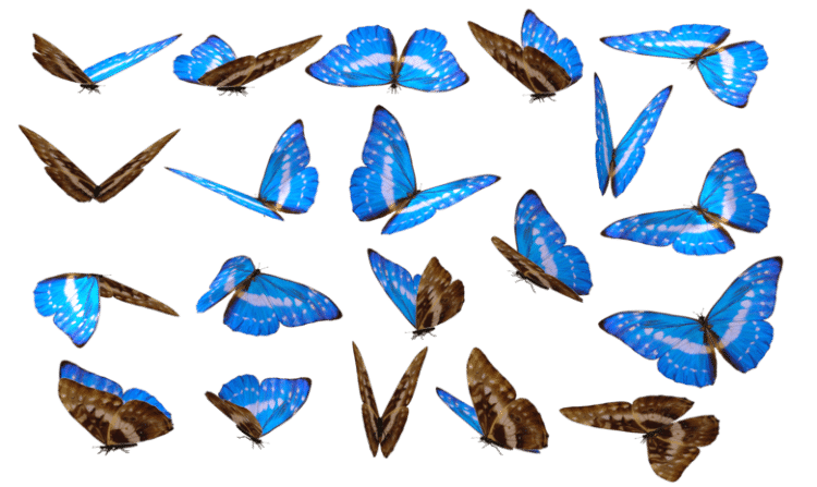 white background full with butterflies in different positions.